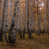 Осенний лес :: Алена Афанасьева