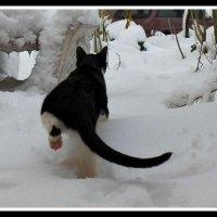 прогулка в снегу :: Uliana Nezgodynska