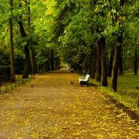 И осень милая,прекрасная осень! :: Виола Мясникова