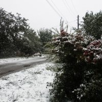 3 октября, встечаем снегом :: Виктория Журавлева