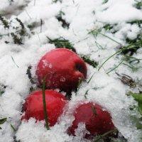 Яблоки на снегу :: Виктория Журавлева
