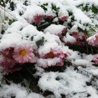 Цветы под снегом :: Виктория Журавлева