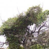 дерево2 :: janekim Kim