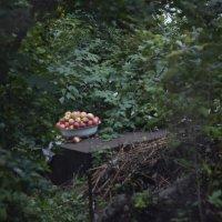 дачные яблоки :: janekim Kim