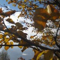 Осень :: Татьяна Говорухина