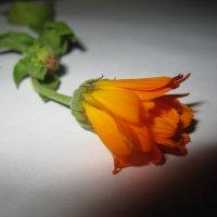Цветок :: Татьяна Говорухина