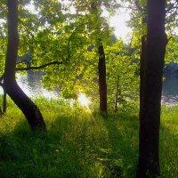 Вспоминая лето :: Светлана З