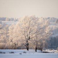 Зима №1 :: Александр Кошкарёв
