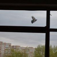 лети! :: Роман Шплеханзидович