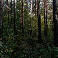 Сумрачный лес.. :: Надежда