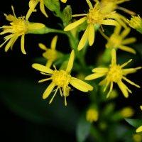 цветы :: Дмитрий Рожков