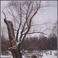 Дерево :: vadim