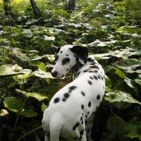 Пятнистый лес :: Павел Чупин