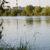 Озеро в городе :: Вячеслав Балабанов