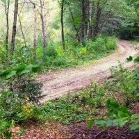 дорога в лесу :: юрий иванов