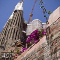 Barcelona 02 :: Malina Shock
