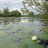 Река :: Valeriy Somonov