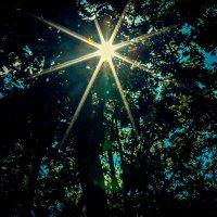 луч солнца) :: Евгения Изотова