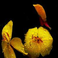 Цветочки :: Светлана З
