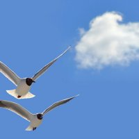 Чайки :: Анна Чернобай