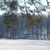 зимний лес :: Ярослав Исаев