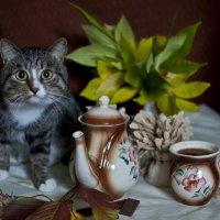 натюр-кот 1 :: Полина Дюкарева
