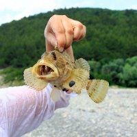 Пойманная рыбка.. :: Юрий Стародубцев