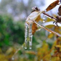 Ледяной дождь. :: Андрей В.
