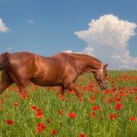 Впереди - год лошади :: Олег Самотохин