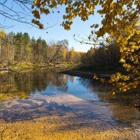 Листопад на реке... :: Сергей