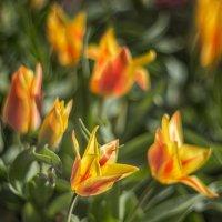 Весна :: Владимир Колесников
