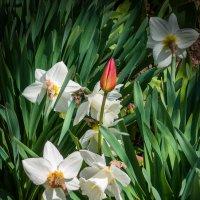 Весна :: Варвара