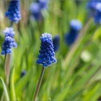Цветы из моего сада :: Влад Чуев