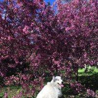 Под цветущей яблонькой :: Надежда