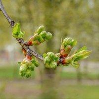 Весна... :: Юрий Гординский