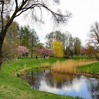 Весенний пейзаж, :: Liudmila LLF
