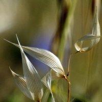 Свети на горестный посев, фонарь сегодняшней печали..И.Б. :: Гала