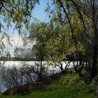 Над рекой облака, серебрится река и весна с деревцами играет...) :: Тамара Бедай
