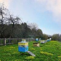 Домики пчел ... :: Лариса Корж