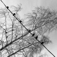 Птички на проводе ... :: Лариса Корж