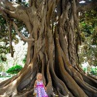 Семена от деревца - бабушке на дачу... :: Сергей Вилков