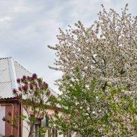 Весна в переулке :: Константин Бобинский