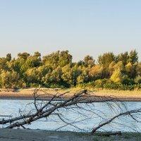 Утро на реке :: Игорь Сикорский
