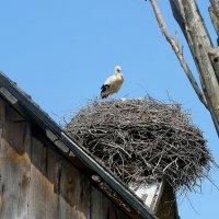 Аист на крыше -  Мир на земле  ! :: олег свирский
