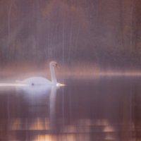 Весенний сон :: liudmila drake