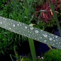 После дождя :: sm-lydmila Смородинская