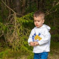 В лесу :: Владимир VS