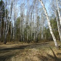 Майский лесной пейзаж . :: Мила Бовкун