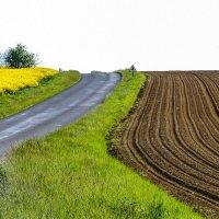 Рапс украшает поле :: Георгий А