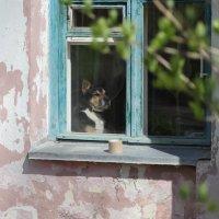 Ретро-дом, ретро-пёс... :: Наташа С